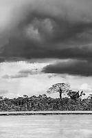 Amazon Rainforest storm, Coca, Ecuador, South America
