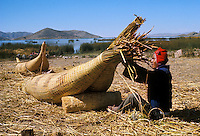 Aymara Indian fisherman making reed raft called  balsa de totora, on Suriqui Island, Lake Titicaca, Bolivi