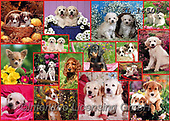 COLLAGEN, photos+++++,KL16505,#collagen#,dogs, EVERYDAY ,collages,puzzles