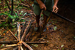 Jaguar (Panthera onca) biologist, Modesto Solis, making fire in field camp in tropical rainforest, Kaminando Habitat Connectivity Initiative, Mamoni Valley, Panama