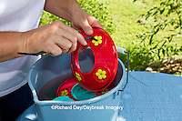 01162-12809 Woman cleaning hummingbird feeder, Marion County, IL