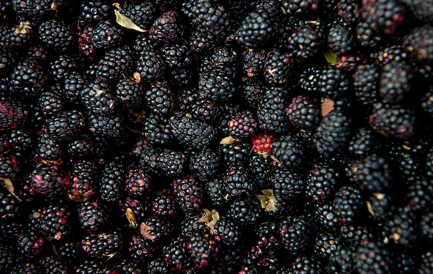 wild blackberry Fruit at the market in Tlayacapan, Morelos, Mexico