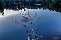 Red maple, Springhill Pond, Adirondack Forest Preserve, New York