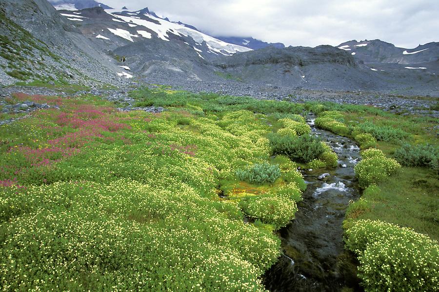 Alpine stream flowing through wildflower meadow, Paradise, Mount Rainier National Park, Washington