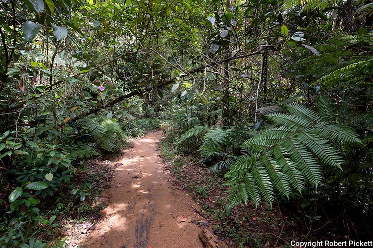 Forest Path in Sinharaja World Heritage Site, Sri Lanka