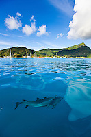 Spinner dolphins guiding the pass, Huahine, French Polynesia