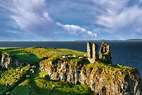 Dunseverick Castle ruins with grazing sheep. Northern Ireland
