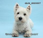 Kim, CHRISTMAS ANIMALS, WEIHNACHTEN TIERE, NAVIDAD ANIMALES, fondless, photos+++++,GBJBWP20807,#xa#