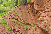 Detail of rock, Cape Hopewell Rocks, New Brunswick, Canada