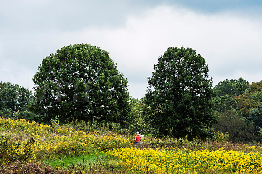 Plein air artist painting in a meadow of flowers.