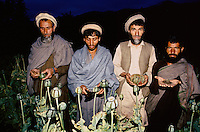 The four steep to obtain opium. From left to right. Nuristani farmers cutting, collecting, storing a 3 Kg of wet opium for few months, for finely obtain a 1Kg of dry opium, to be transform in to heroin in the Eastern Afghanistan/Pakistan border.