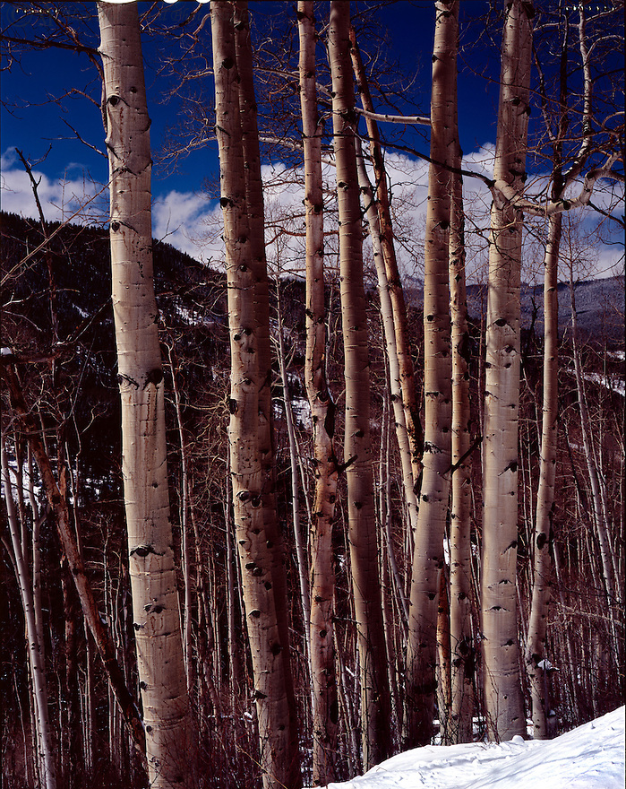 """Aspens on Fryingpan Road""<br />