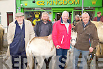 Michael O'Connell Spa/Fenit, David Curtin Knocknagoshel, Tom Connell Kilflynn and Jerry Courtney Castleisland selling and buying donkeys at the Castleisland Horse Fair on Friday