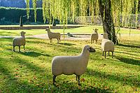 France, Indre-et-Loire (37), Chenonceaux, château et jardins de Chenonceau, jardin Hommage à Russell Page et moutons par François-Xavier