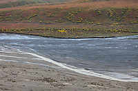 Grizzly bear sow and cubs walk along the braided East fork river in Denali National Park