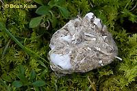 0W09-528z  Regurgitated owl pellet, showing bones and hair