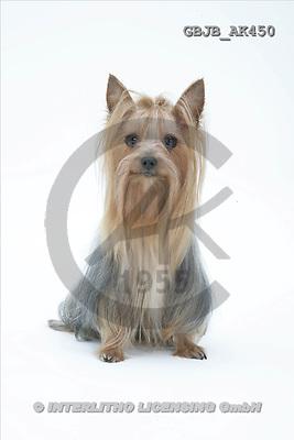 Kim, ANIMALS, fondless, photos(GBJBAK450,#A#) Tiere ohne Fond, animales sind fondo