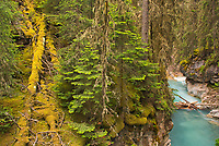 Johnston Canyon<br />
