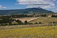 Europe/France/Rhône-Alpes/26/Drôme/Env de Montbrun-les-Bains:  le Plateau d'Albion et en fond le Mont Ventoux