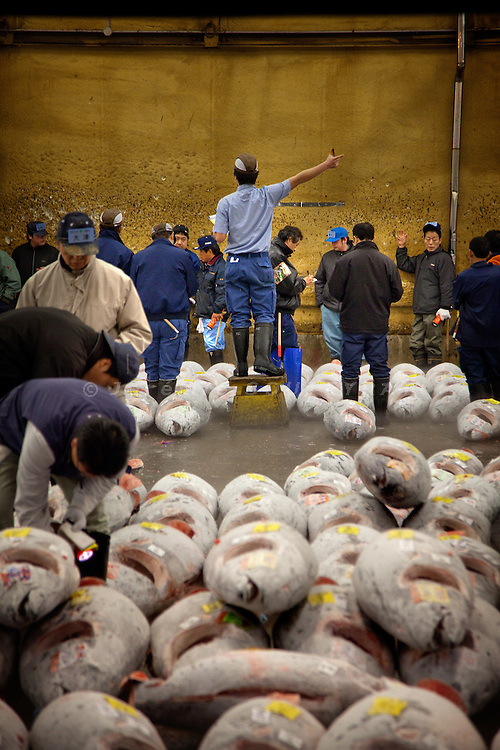 Tokyo, 1st of March 2010 - Tuna at Tsukiji wholesale fish market, biggest fish market in the world. 6:05 a.m, an auction for frozen tunas. Frozen tunas can be kept frozen during one year before being sold.