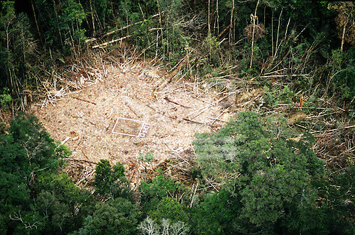 Caraoari, Amazonas State, Brazil. Area of rainforest newly cleared and marked for seismic surveying for oil exploration.