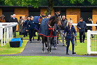 Horses enter the Parade Ring prior to the first race during Evening Racing at Salisbury Racecourse on 11th June 2019