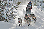 Dog Sled Race, Cariboo, B.C.
