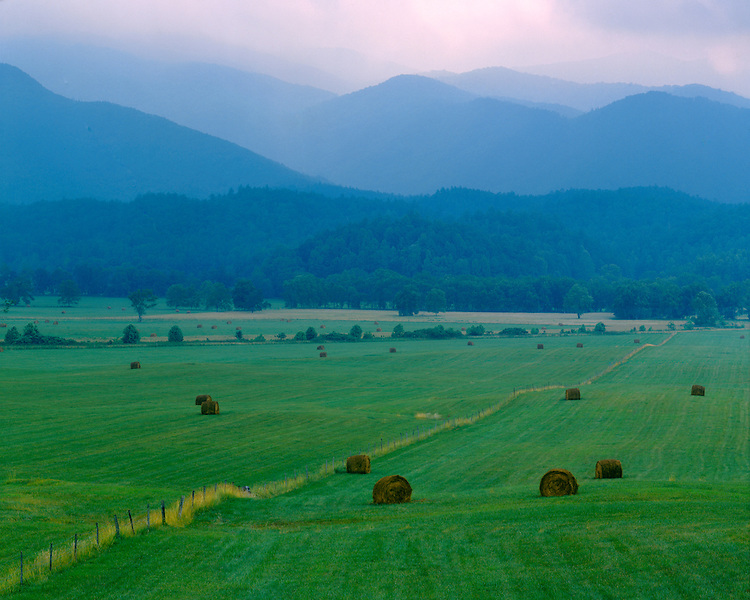Foggy morning light on a field of hayrolls in Cades Cove; Great Smoky Mountains National Park, TN