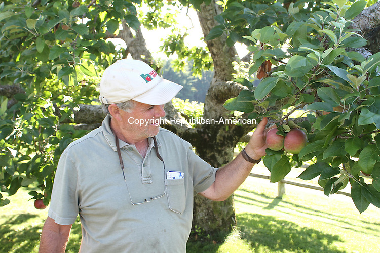 CHESHIRE, CT, 03 September 2014-090314LW01 - Fred Kudish, co-owner of Hickory Hill Orchards in Cheshire inspects a pair of cortland apples on an old tree. Laraine Weschler Republican-American