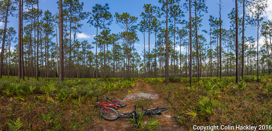 CRAWFORDVILLE, FLA. 11/6/16-Mountain bikes at rest during a camping trip in the Apalachicola National Forest.<br /> <br /> COLIN HACKLEY PHOTO