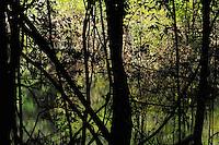 Rainforest, Rio Negro, Amazonas, Brazil.