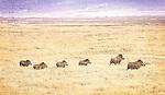 Hyena, Warthog, Jackal and Others