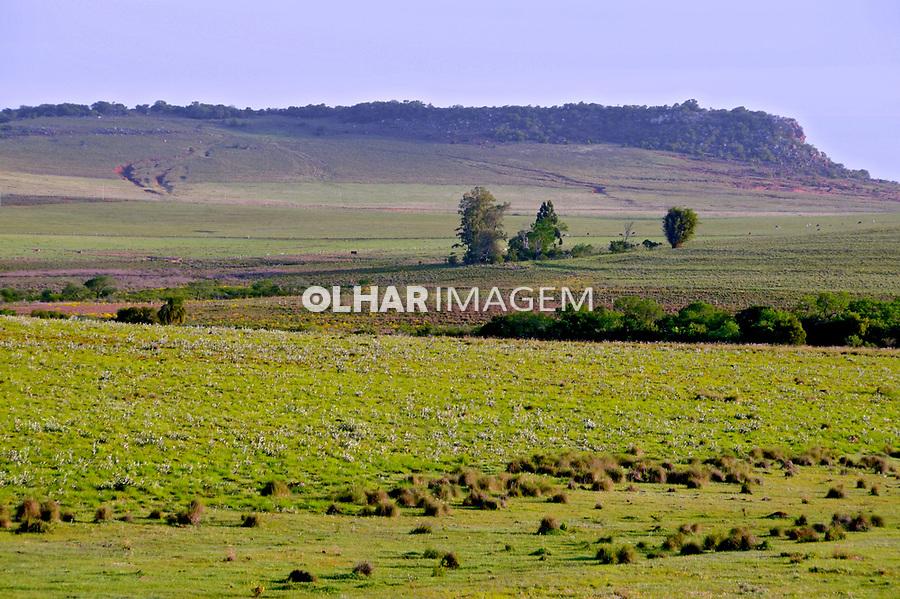 Campos gaúchos em São Francisco de Assis.. Rio Grande do Sul. 2009. Foto de Zig Koch.
