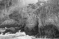 Point Lobos State Preserve, California