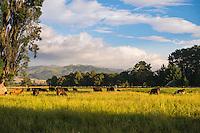 Wairarapa New Zealand Images