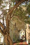 Israel, Acco, Chaste tree in Al Jazzar Mosque