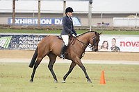 Lady's Hunter over 15hh