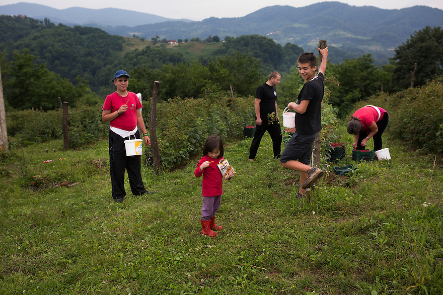 Safet Imer, center, in black with some of the pickers he employs and his daughter, Selma, center front, at the raspberry patch his family planted on the land inherited from his father who died twenty years during the genocide in Srebrenica, when more than 8000 Muslim men were massacred by Serbian units as part of a campaign of ethnic cleansing perpetuated during the Bosnian War.