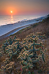 Cactus at sunset over the Seawall path next to Carlsbad State Beach, Carlsbad, San Diego, California