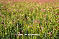 63863-01707 Prairie Blazing Stars (Liatris sp.) & Rattlesnake Master (Eryngium yuccifolium) Lee Co.   IL