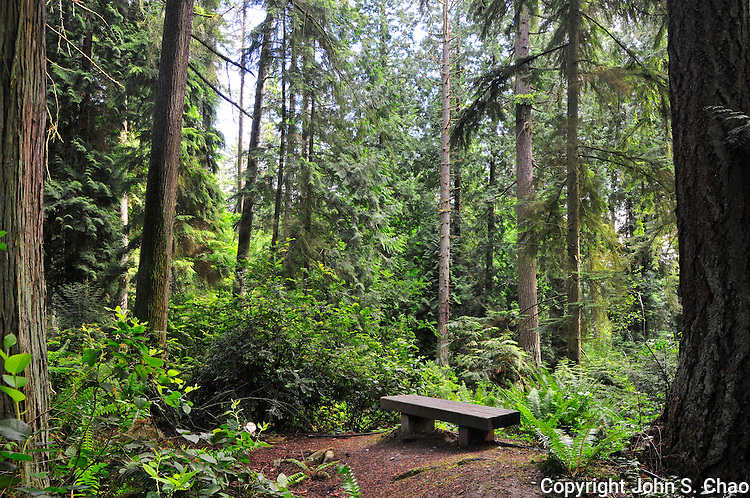 Park Bench in wooded Weowna Park, Bellevue, Washington State. Horizontal version.