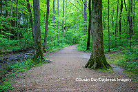 63895-14715 Trail at Ferne Clyffe State Park, Johnson Co. IL