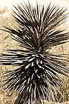 Corpus Christi TX 2006 Corpus Christi TX 2006