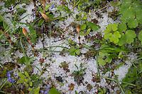 Hagel, Hagelkörner, Hagelkorn, Hagelschauer, im Frühjahr, Niederschlag, Hagelschlag, hail, hailstone, hailstones, hailstorm