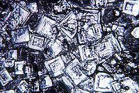 TABLE SALT CRYSTALS - NaCl