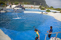 A dolphin jumps out of the water at Sea Life Park as trainers watch