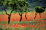 Espagne, Andalousie. Plaine le long de la Sierra Nevada. *** Landscape along the Sierra Nevada, Andalusia, Spain.