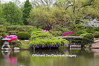 65021-03606 Bridge in Japanese Garden in spring, MO Botanical Gardens, St Louis, MO
