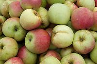 Apples in a bin, Snohomish County, Washington.