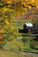 farm, fall, South Pomfret, VT, Vermont, Sleepy Hollow Farm surrounded by colorful maple trees in autumn.